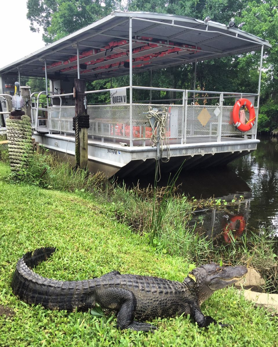 Swamp Tour New Orleans >> Why We Are The Best New Orleans Swamp Tour Jean Lafitte Swamp Tours